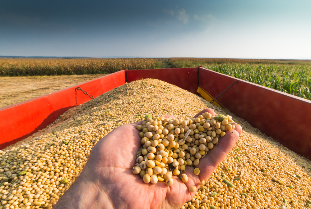 President's Trade War Crashes Soybean Prices for American Farmers